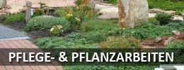 Pflege & Pflanz